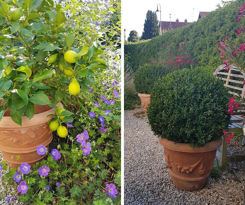 Impruneta Terracatta, Zitronenbaum